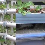 Aquaponik, Penghasil Sayuran Organik Sekaligus Penghasil Ikan Segar dari Rumah Sendiri