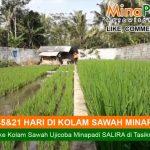 Salira Ajak Para Petani Generasi Milenial untuk Mina Padi