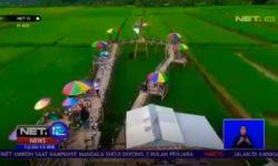 Keren, di Desa Cikurutug Sukabumi Jabar Ada AgroWisata Mina Padi